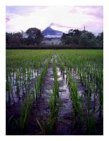 Merapi -portrait- by latebraking
