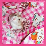 Patsy and Hamtaro by emmil