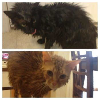 My Cats After a Bath by Vampiricme