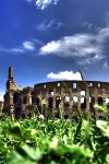 rome, colosseum by madita