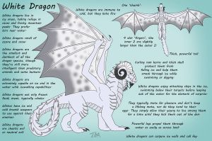 White Dragon Reference Sheet by chaosinvert