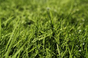 Water droplets on grass by BenBrotherton