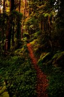 the path by nokel