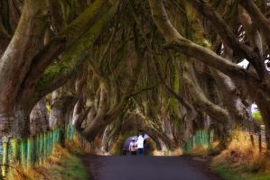 Dark hedges by Wanowicz