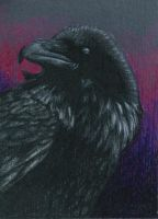 ACEO crow by Leftblind