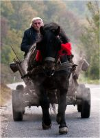 Country life by SasaLeteci