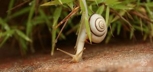 travel of a snail 003 by Bheeshoom