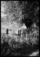 The Old Fence in rural scenery by ziperka