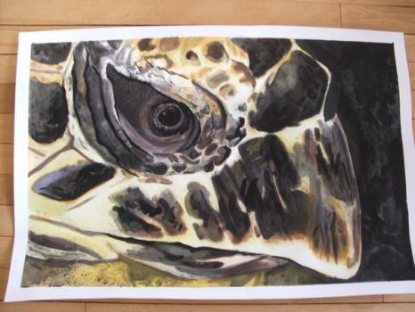 Sea Turtle by batmangirl2005