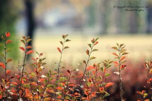Fall is here by PristineEloquence