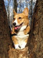 Tree Corgi by MutantLilies