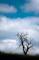 Strong Alone by OlivierAccart