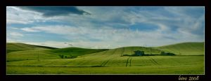 Green fields by laino