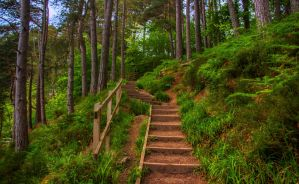 Stairway to Heaven, Falls of Foyers, Scotland by Raiden316