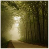 Fall series: misty road by kozelova