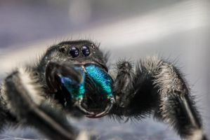 Large Bold Jumper showing his fangs by Fiend-V