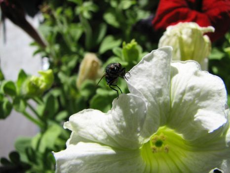 Fly on Flower 01 by LithiumStock