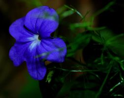 Blue Flower 2 by baruch60610