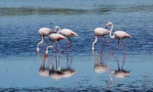 Flamingos by AfricanObserver
