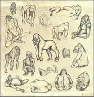 Gorilla Sketches by foxibiri