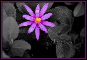 Flower CXXIV by AletheaDo