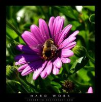 Hard Work by Insect-Lovers-Club