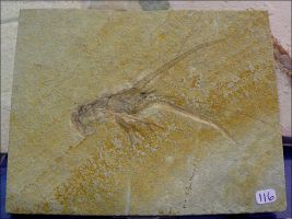 Fossilized Lobster by Undistilled