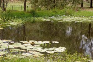 Lilly pond stock 2 by Chunga-Stock