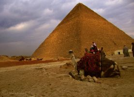 Beduin Camel by the Pyramides by Moonbird9