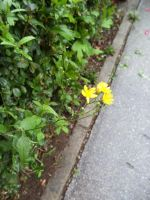 A Yellow Flower by theWitchofGrich
