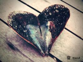 seashell heart by qylie