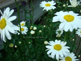 Daisies by Resensitized