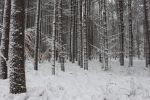 Winterscape by Salamander-Stock