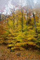 White Mountains  Fall Foliage  08 by FairieGoodMother