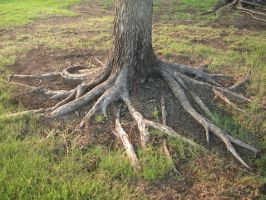Tree Roots by Obsolete-Stock