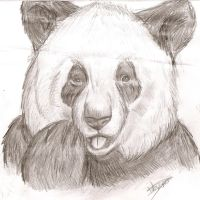 old panda drawing by chocolatwolf