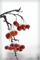 red fruits by Finvara