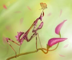 Mantis and butterfly by CriAnn