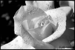 but a rose II by if-only-random