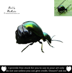 Leaf beetle png by TinaLouiseUk