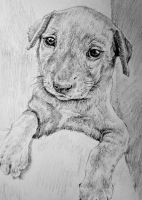 Puppy by KingVahagn
