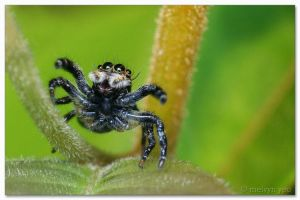 Spider2 by melvynyeo