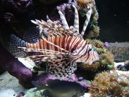 Lion Fish by Oddstuffs