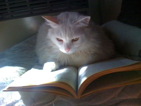 Kitty and the book by Kalosys-stock