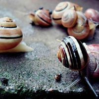 Snails 3 by CocoaDesert