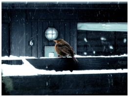 Bird in the snow by nadda1984