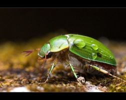 Green Scarab by light-recycled