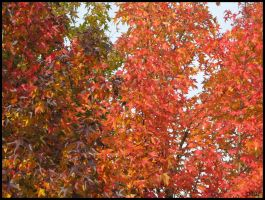 RedLeaves by DropOfTime