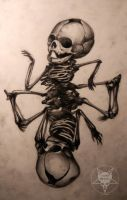 foetal skeleton by AndreySkull