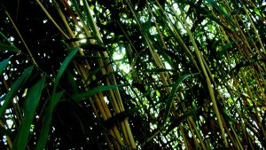 Makeshift Bamboo 2 by Varcolacu